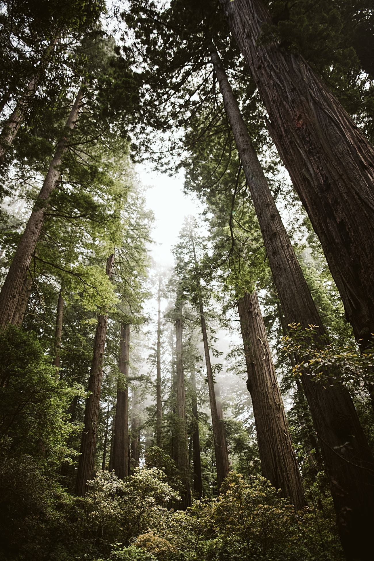 Camping in Redwoods National Park, Redwoods Travel Guide, Travel Photographer