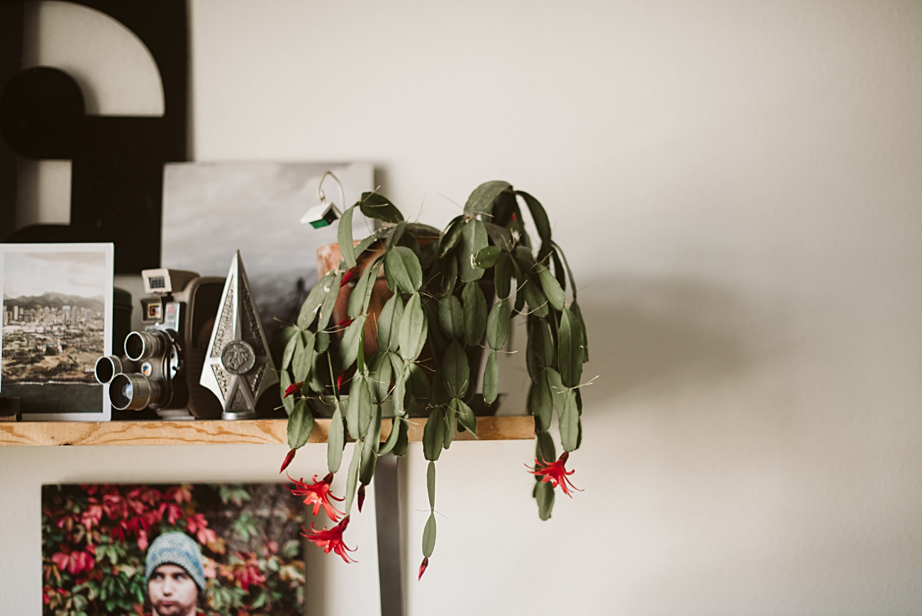 Christmas Cactus, Grandmother, Plant Care - Our Madison Life - Natural Intuition Photography